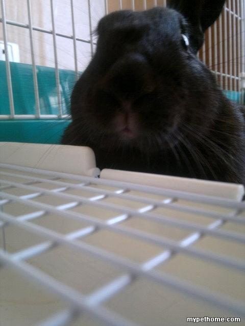 一只丑兔子这个夏天的生活照