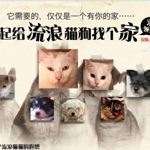 宠物之家与懒悠悠网站合作活动——一起为流浪猫狗找个家
