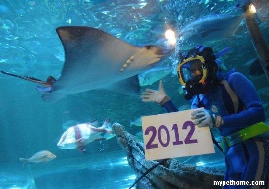 东京水族馆海洋动物迎接新年 - 小报 - 宠物之家